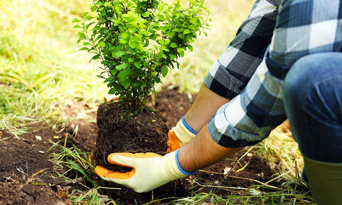 Planting Services